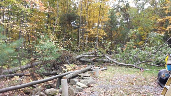 Felled trees resized 600